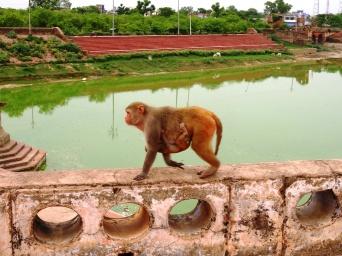 Le palais des singes