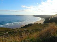 Nouvelle-Zélande - Côte est, de belles baies ouvertes sur des prairies à mérinos