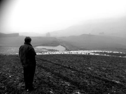 Nouvelle-Zélande. Le père devant son troupeau.