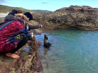Pêche de bébés phoques à marée basse.